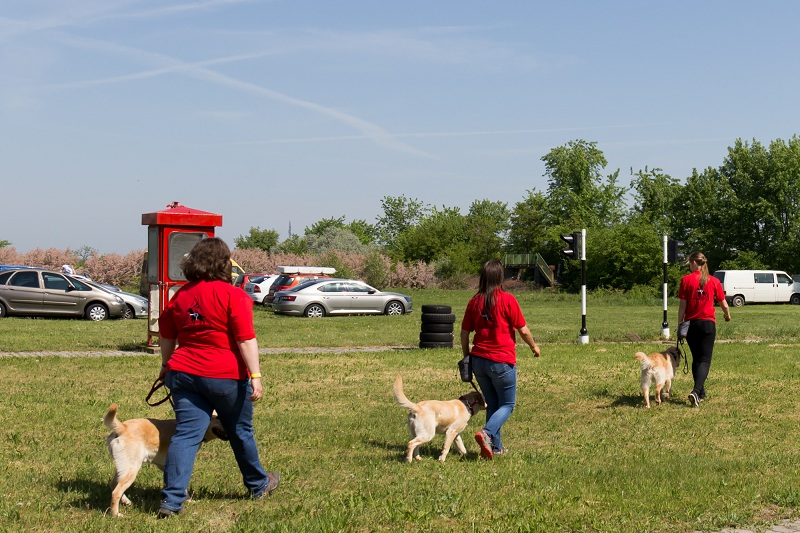 Kép: Kutyaiskola kiképzői kutyáikkal gyarkolatoznak