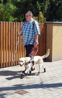 kép:Egy férfi éppen sétál vakvezetőkutyájával lakóhelyén lévő utcában